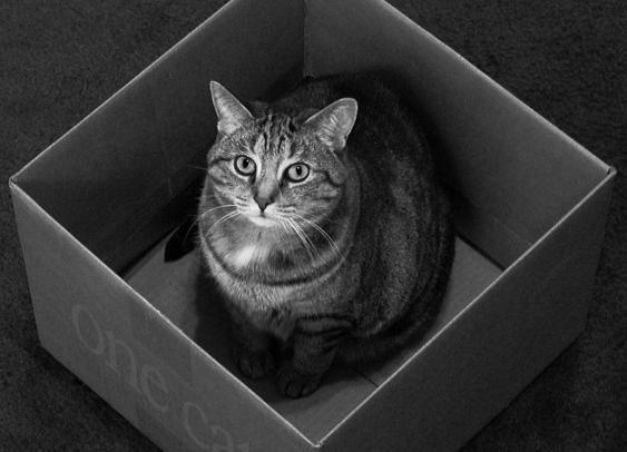 შროდინგერის კატა(გიორგი)